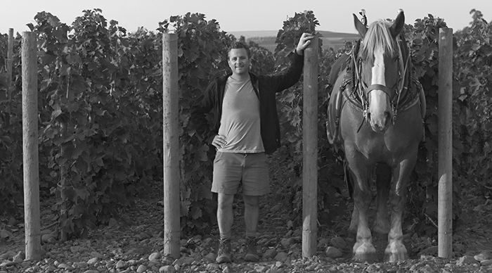 Vigneron Christophe Baron and Zeppo, a Belgian heavy draft horse
