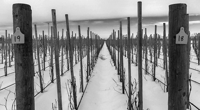 The Tribe Vineyard in the snow